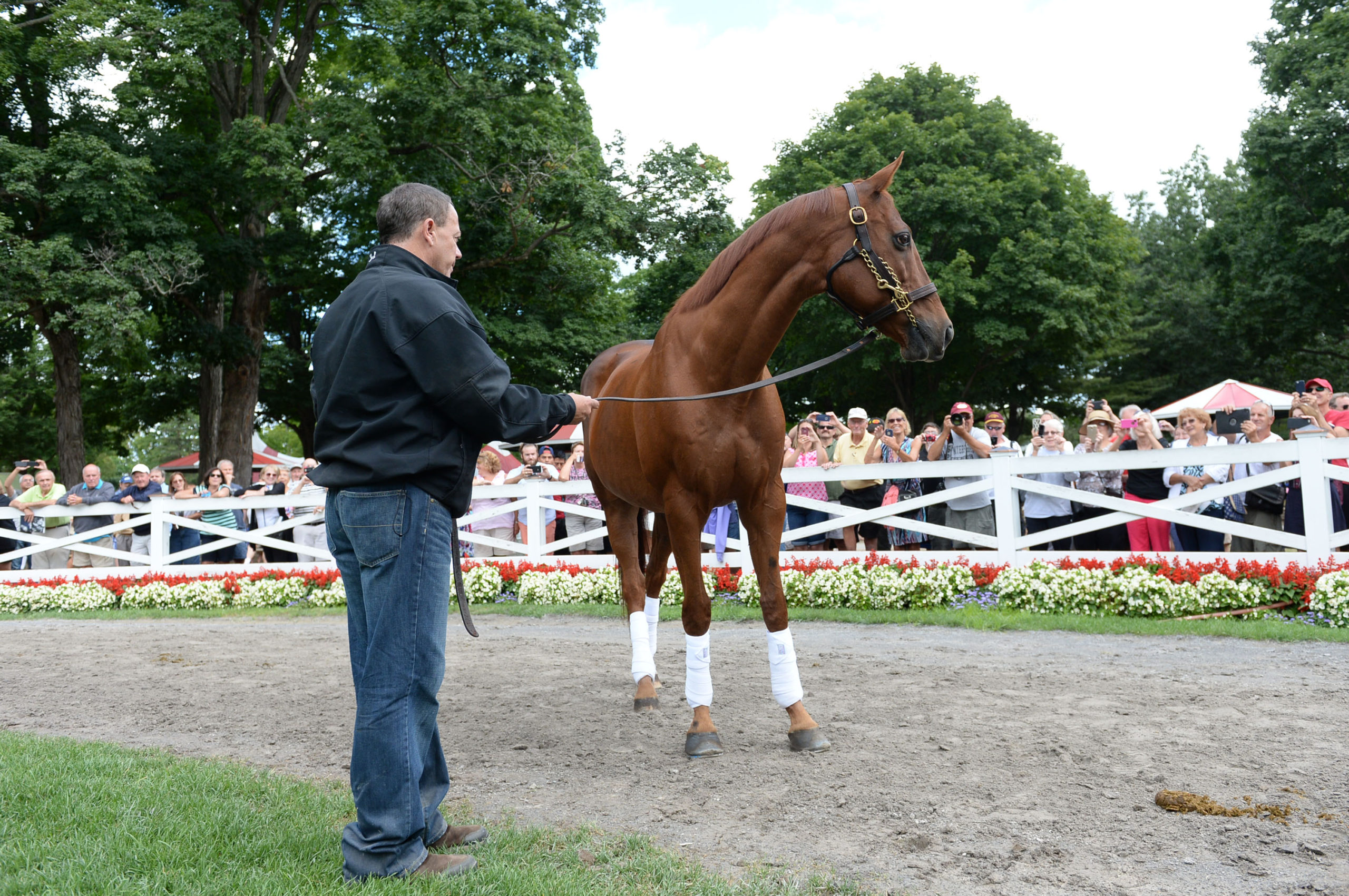The People S Champion Funny Cide Thrills Fans The Daily Gazette