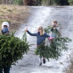 Photo Gallery: Finding Christmas trees Saturday at Goode Farm in Ballston