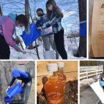 Area schools vying for best maple syrup in statewide contest