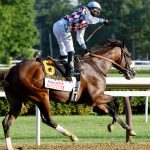Tiz the Law named New York-bred Horse of the Year
