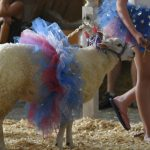 Saratoga County Fair hopes to hold an event this summer