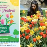 Albany Tulip Festival to be virtual celebration throughout May