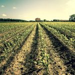 174 acres of farmland protected in town of Saratoga