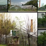 Images: Nature reclaims the former VanCurler Greenhouses in Glenville