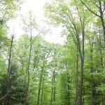 Forest Service awards Saratoga County $391,000 grant; For 202-acre community forest in Wilton, Green...