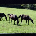 EDITORIAL: Bills seek to end slaughter of horses