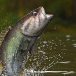 Outdoor Journal: Vermont team wins bow carp shoot at Saratoga Lake