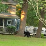 Hide the snacks: Bear continues to munch on food in Glenville area