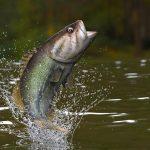 Outdoor Journal: Saratoga Tackle bass tournament updates