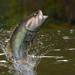 Outdoor Journal: Area winners abound at two bass tournaments
