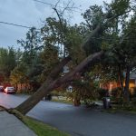 Large tree falls on wires in Niskayuna after storm