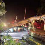 Ballston Spa FD: Car hits tree felled in Saturday night rain; Driver taken for evaluation