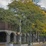 Tree replanting planned in front of downtown Schenectady library