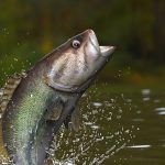Outdoor Journal: Catch-and-release trout stream season underway