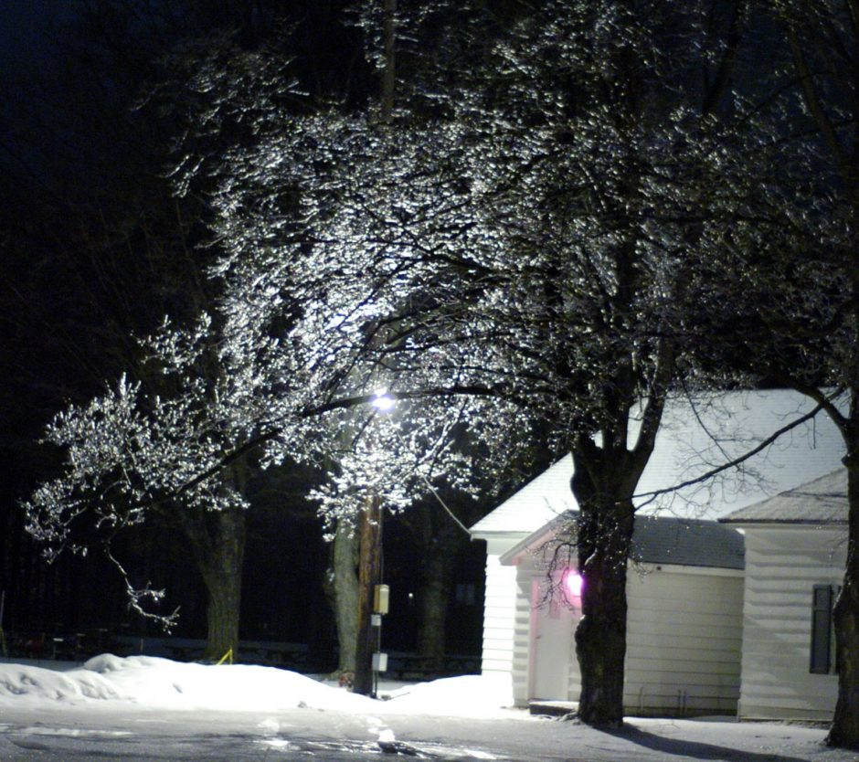 Ice forms Friday evening on tree branches at a quiet Saratoga Race Course off Union Avenue.