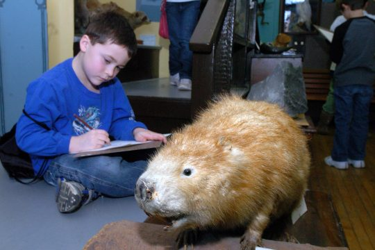Eight year old Daniel VanEps draws a beaver  during a morning art lesson at the Walter Elwood Museum on Thursday.  The program is the museum's winter break enrichment camp. They have been having activities all week including tie-dying and painting.