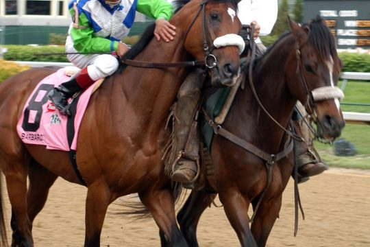 Jockey Edgar Prado touches Barbaro's neck during the post parade for the 2006 Kentucky Derby. Barbaro won the Derby but then broke his leg in the Preakness.