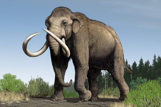 Carl Buell's depiction of a mammoth.