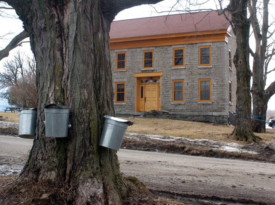 --Maple syrup buckets hang along Lynk Road at the Stone House Farm near Sharon Springs, a site where production of the product is showing an increase over the past two  years.