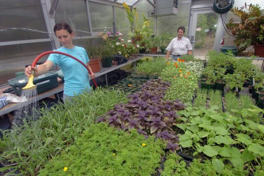 Students at Union College have started an organic greenhouse with assorted flowers and vegetables. With help from Connie Schmitz, a horticulture and landscape specialist for the college, the students have been successful at producing a good yield this spr
