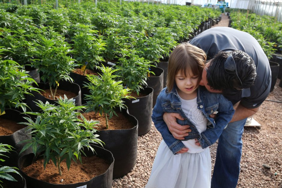 Matt Figi hugs and tickles his once severely-ill 7-year-old daughter Charlotte, as they wander around inside a greenhouse for a special strain of medical marijuana known as Charlotte's Web, which was named after the girl early in her treatment, in a re...