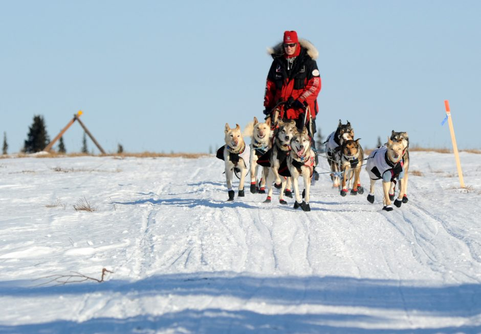 Aliy Zirkle drives her dog team across the portage from Kaltag to Unalakleet. Zirkle is the first musher to reach the Bering Sea in Unalakleet during the 2014 Iditarod Trail Sled Dog Race on Saturday, March 8, 2014.