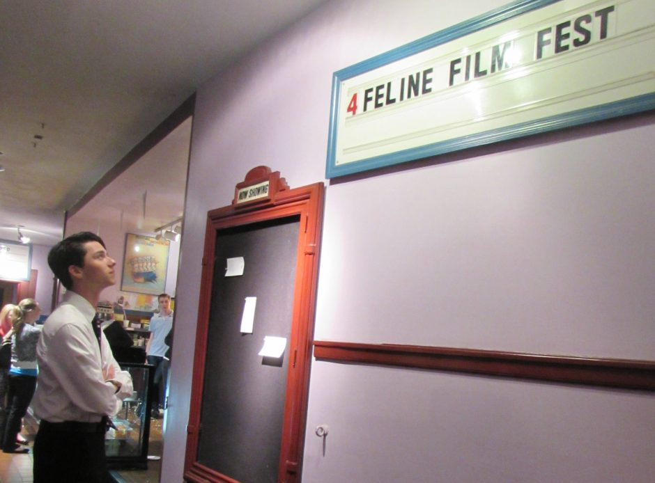 Schenectady High School senior Draven Rodriguez prepares to enter the First (and Probably Last) Capital Region Feline Film & Video Festival for Humans on Tuesday night at Spectrum 8 Theatres in Albany.
