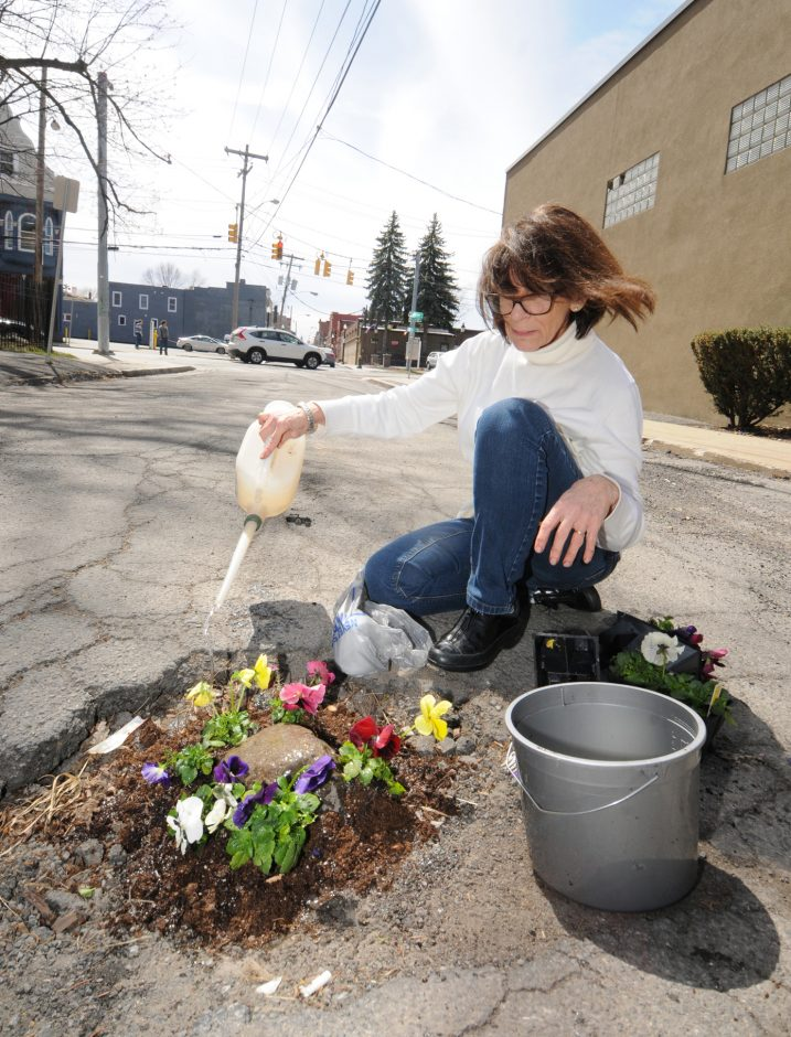 Schenectady resident Elaine Santore fills a pothole in the middle of North Center St. with pansies.