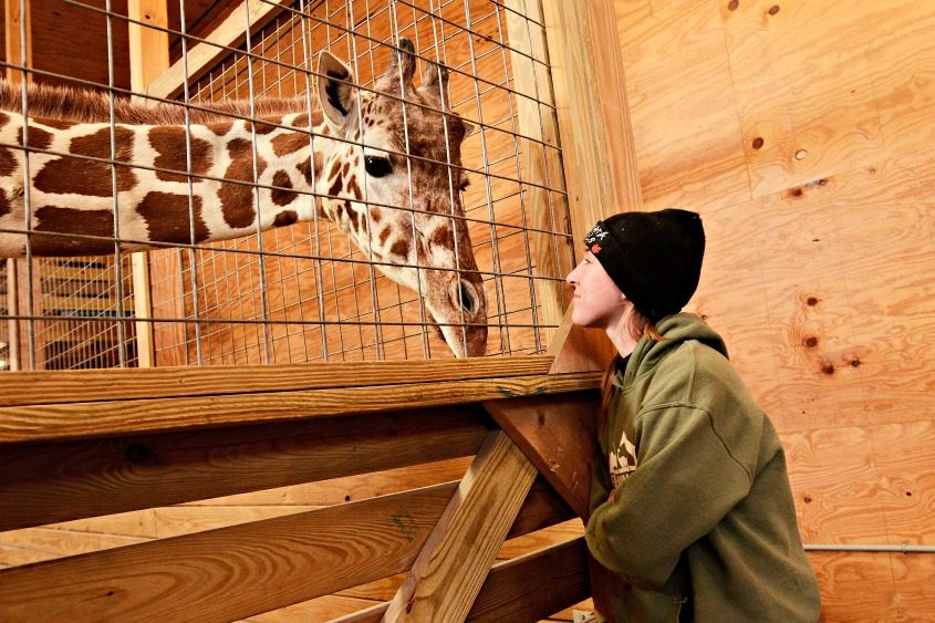 Allysa Swilley, right, a zoologist and head giraffe keeper, with April on March 3, 2017.