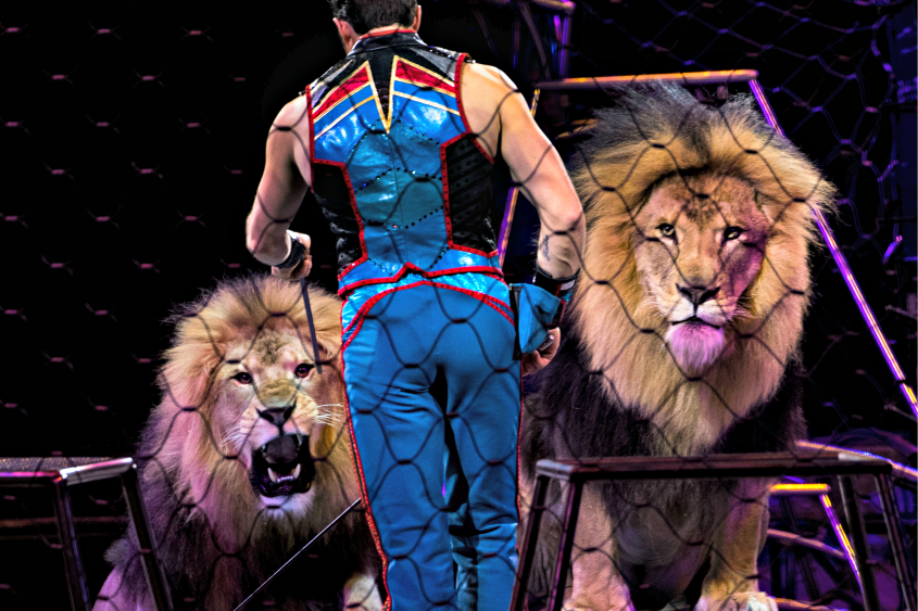 Alexander Lacey, animal trainer for the Ringling Bros. and Barnum & Bailey circus, in Washington on March 31, 2017.