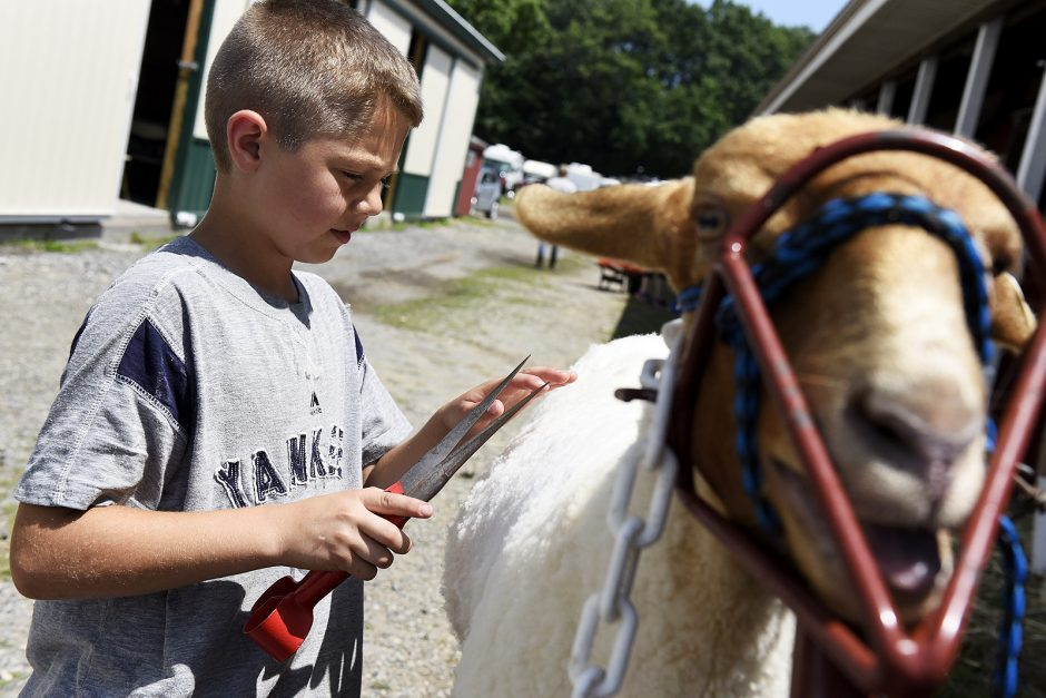 Colin Anderson, 10-years-old of West Charlton with Anderson Acres, trims his sheep Ruby.