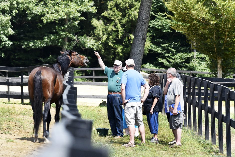 Old Friends at Cabin Creek in Greenfield Center is a home for retired race horses.