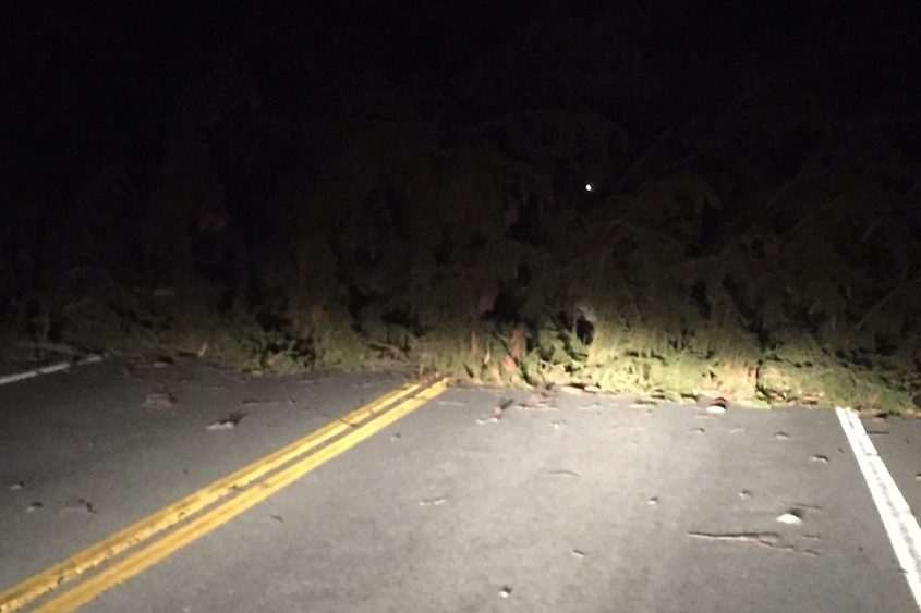 A fallen pine tree completely blocks Pruyn Hill Road in Halfmoon before 1 a.m. Thursday, April 5.