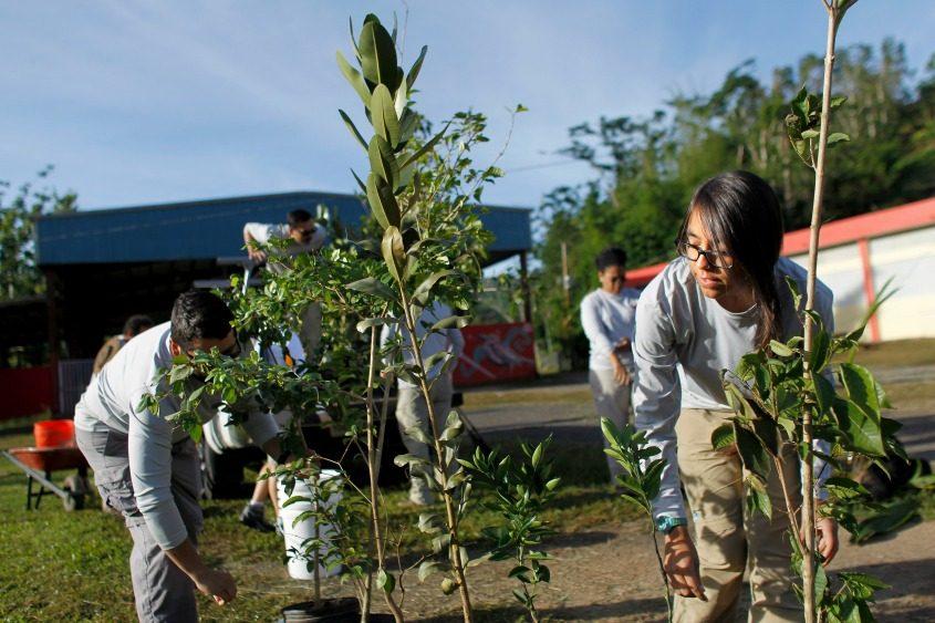 Volunteers plant native trees in Cialitos, Puerto Rico.