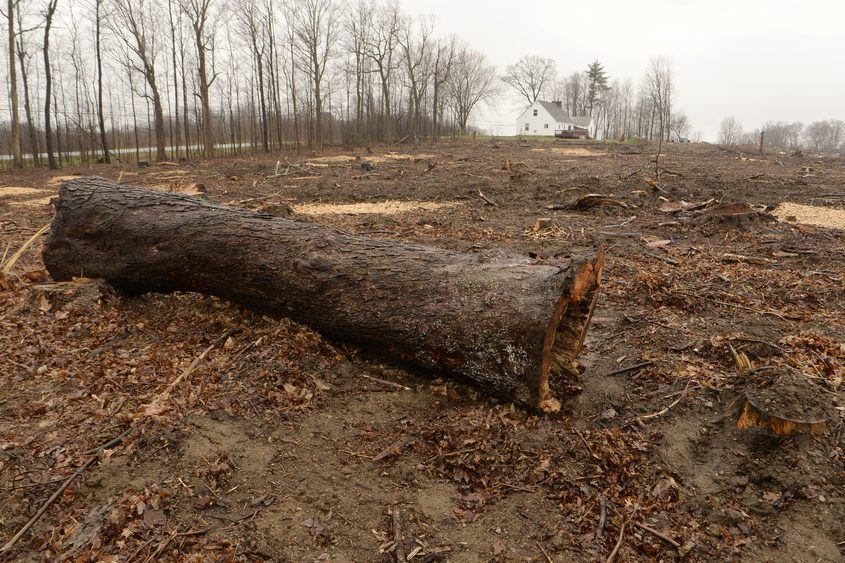 Land on Route 146 east of Miller Road in Jonesville has been cleared of trees for the expansion of a housing development.