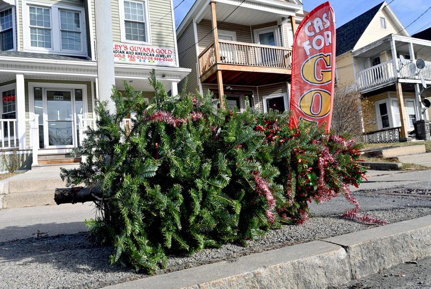 A Christmas tree is at the curb for disposal in the central State Street area of Schenectady Wednesday.