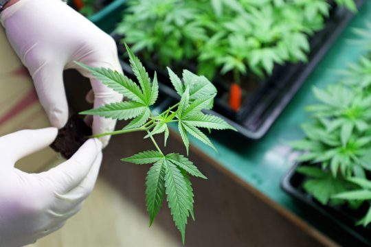 Financials are improving for medical marijuana companies in New York, but they still haven't achieved profitability.