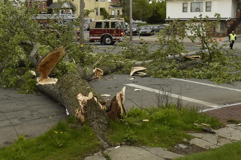 A fallen tree in Schenectady in May 2017