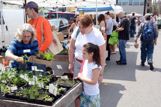 Schenectady's Green Market, pictured in 2015.