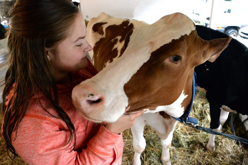 Shannon Sears,18, of the Ira-Moos Farms, Middlefield, with one of her registered Holsteins.