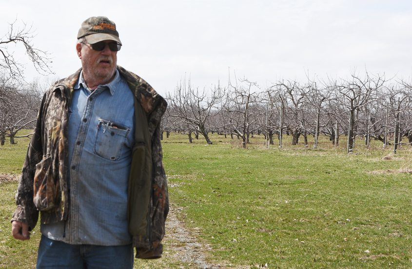 Duane Lindsey, manager of the former Lindsey's Orchard Farm, walks the property where a solar farm will be located.