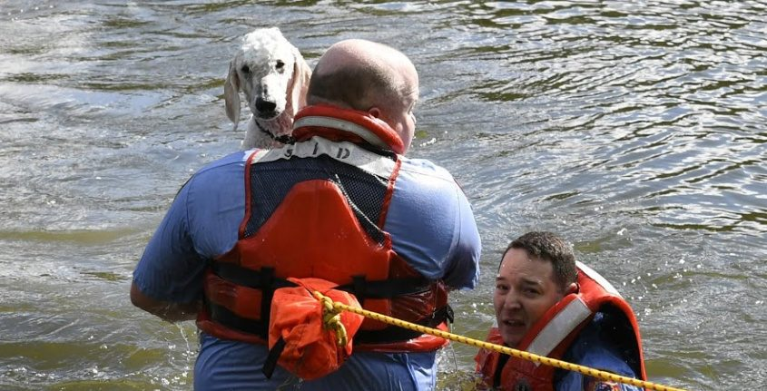 Schenectady firefighters Christopher McCabe and Anthony Catalfamo rescue Victor the dog Wednesday