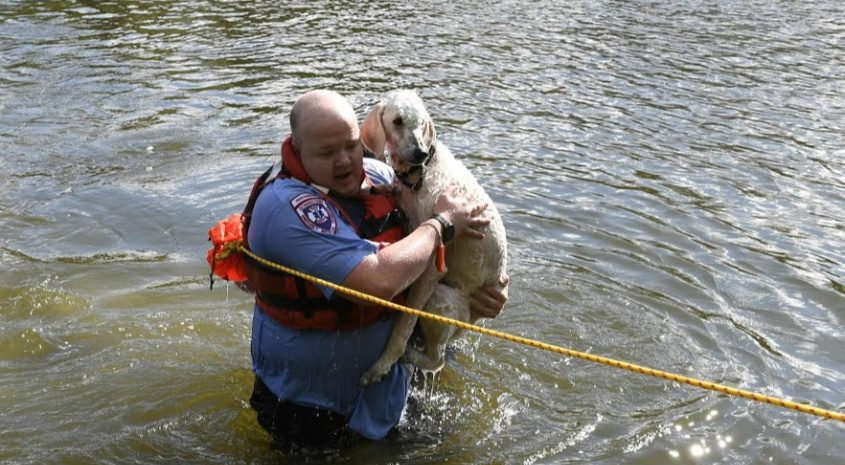 Schenectady firefighter Christopher McCabe carries Victor to shore Wednesday morning