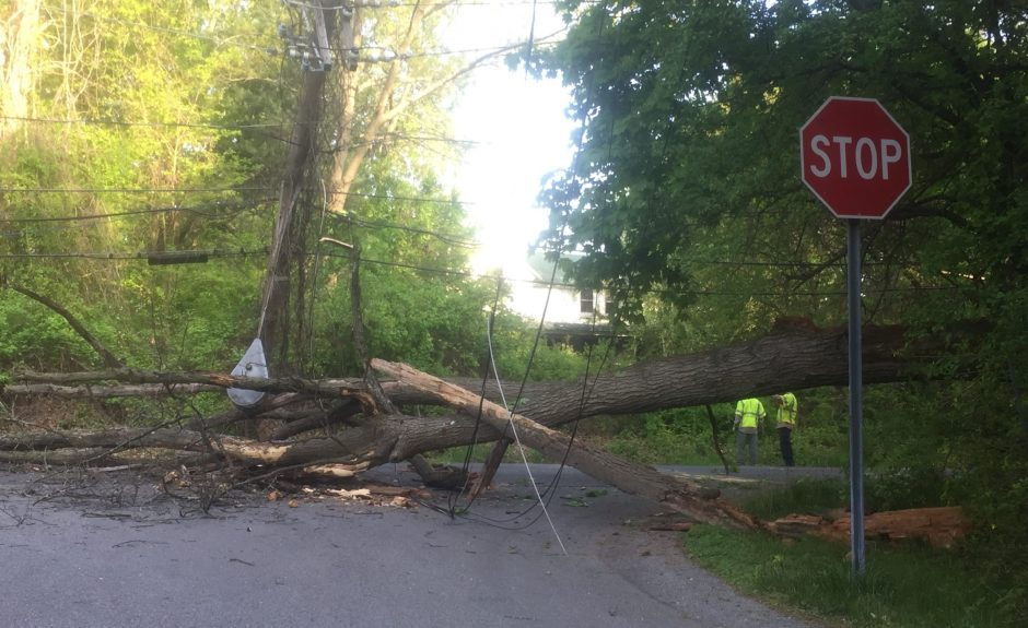 The tree across Balltown Road at Townsend
