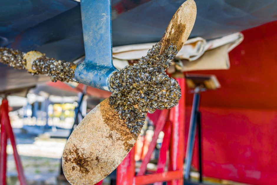 Zebra mussels, an invasive species of fresh water mussels, on the propeller and shaft of a sailing yacht.