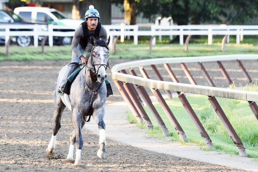 Tacitus and exercise rider Juan Quintero go for an easy gallop on the Oklahoma Training Track in Saratoga Springs Tuesday.