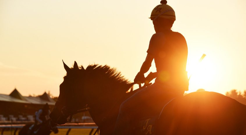 A horse on the main track in the early hours of training at Saratoga Race Course July 7