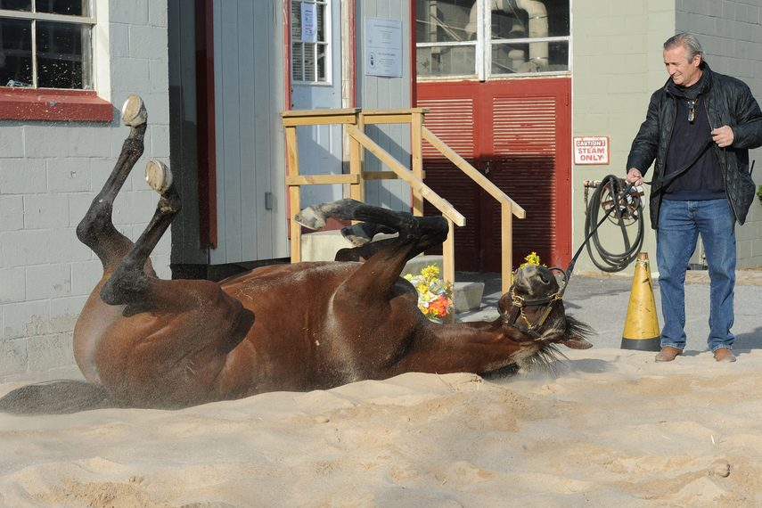 Trainer Rick Violette lets his Kentucky Derby runner Samraat take a roll in the dirt in April, 2014.