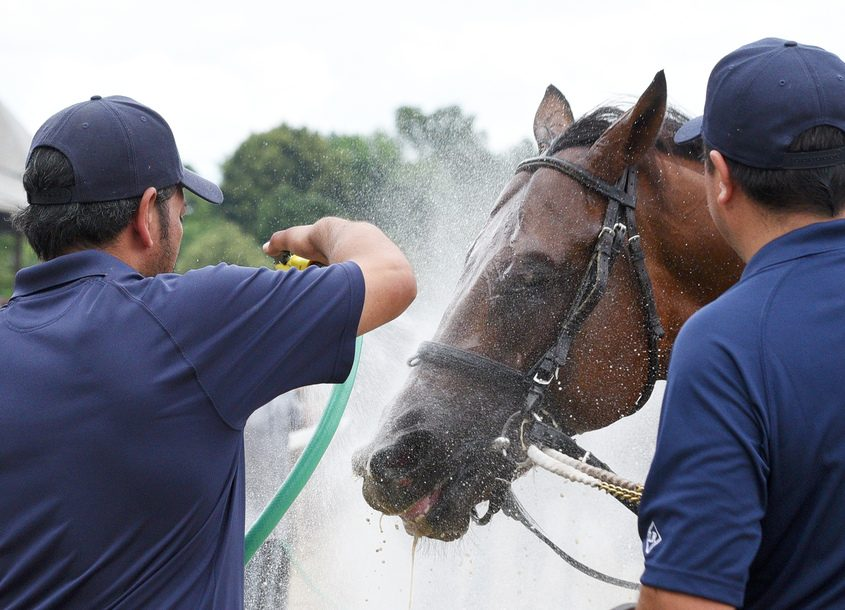 Horses are cooled off after the 5th race at Saratoga Race Course on Thursday.