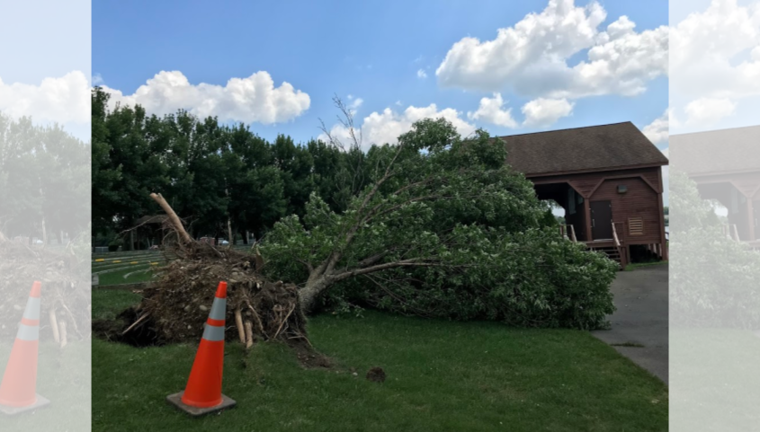 A felled tree at Freedom Park in Scotia